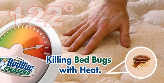Philadelphia Bed Bug Heat , Bed Bug Heat Treatment Philly , Bed Bug Heat Treatment Philadelphia , Kill Bed Bugs Philly , Kill Bed Bugs Philadelphia , Bed Bug Exterminator Philly , Bed Bug Exterminator Philadelphia ,