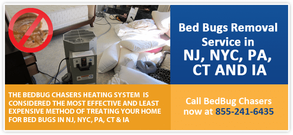 Get Rid of Bed Bugs Philly , Get Rid of Bed Bugs Philadelphia , Bed Bug Spray Philly , Bed Bug Spray Philadelphia , Bed Bug Treatment Philly , Bed Bug Treatment Philadelphia ,
