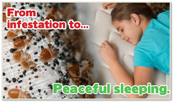 Kill Bed Bugs Philly , Kill Bed Bugs Philadelphia , Chemical Free Bed Bug Treatment Philly , Chemical Free Bed Bug Treatment Philadelphia , Bed Bug Heat Treatment Philly , Bed Bug Heat Treatment Philadelphia , How to get Rid of Bed Bugs Philly , How to get Rid of Bed Bugs Philadelphia ,